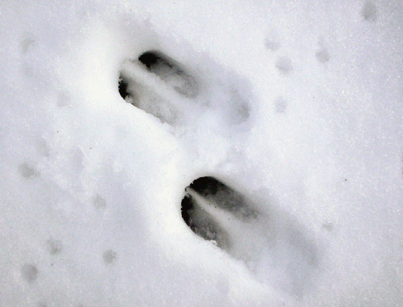 Tracking Wounded Deer When Is The Right Time
