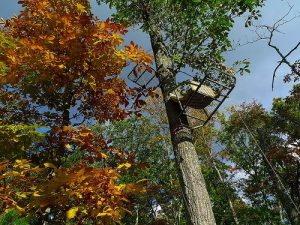 Tree-stand