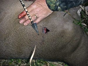 wounded-deer