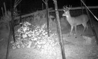 Best Attractants for deer