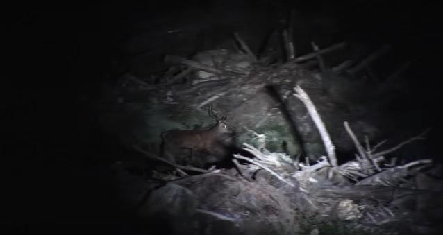 deer_caught_flashlight